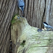 """ Hey , Mr Blue Jay that's mine """