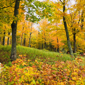 A Happy Golden day at Limberlost Forest!