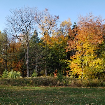 Fall in Pickering, ON