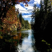 Crisp fall day at the Cowichan River