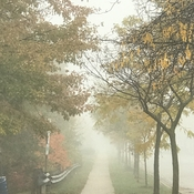 Beautiful foggy morning