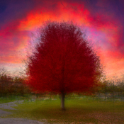 Red Autumn Aura