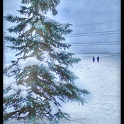 Tiny walkers, dwarfed by impending snowfall !