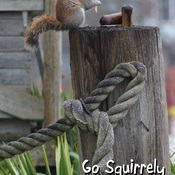 Go Squirrely