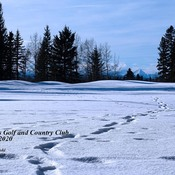 Walk at Priddis Greens Golf and Country Club