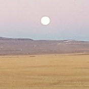 Beaver moon in the morn