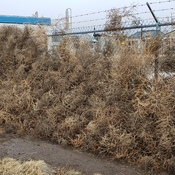 Tumbleweed Collector