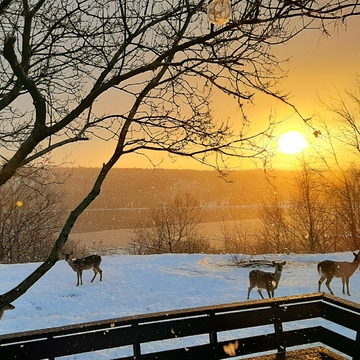 Sunrises with the deer.