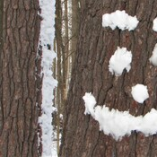 A snowy smile on a tree trunk!