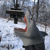 Shark in High Park