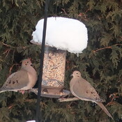 Birdfeeder get together