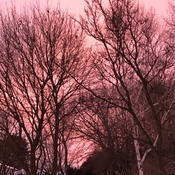 Pink sky at night, sailors delight!
