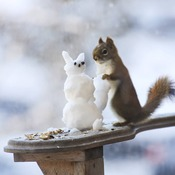 Squirrel with snowsquirrel