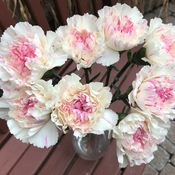 Victorian-esque carnations;)