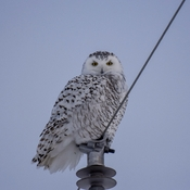 One of 11 owls spotted this afternoon