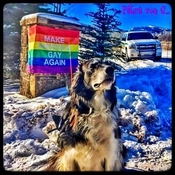"My dog helps me ""represent "", like the sign says ! 🏳️‍🌈"