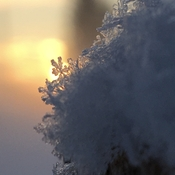 Snowflake at sunrise