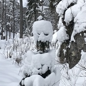 Snow Man in Haliburton Forest