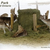 Deer Park Waterford Ontario Canada