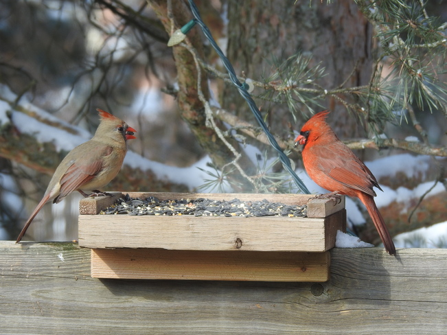 Cardinals Sharing NEW DUNDEE