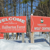 Halliburton Forest .......Dog Sledding