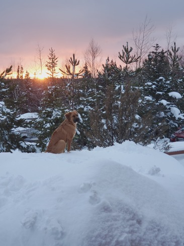 Watching the setting sun Notre Dame Junction, NL