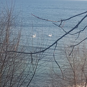 Swan's on Lake Ontario