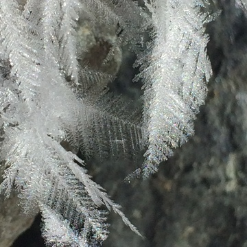 Frosty Feather Frost