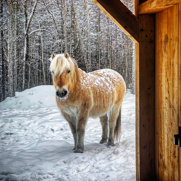 Horse enjoying the snow