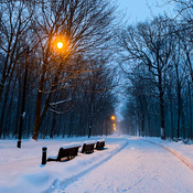 Winter night walks in the park
