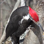 Beautiful Colored Woodpecker