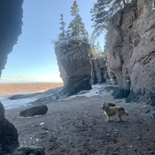 Hopewell Rocks in March 2021