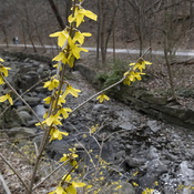 Spring in Mt. Pleasant Ravine
