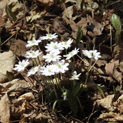 Wild Flowers in Forest - First of the Spring Season