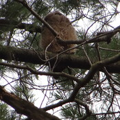 The Owl (Child) @ High Park