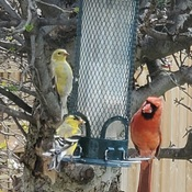 busy day at the feeder.