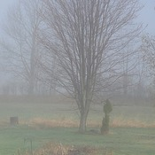 one foggy day