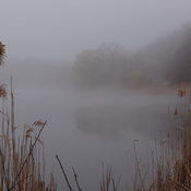 The Fog @ Grenadier Pond - High Park