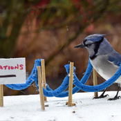Blue Jay, it is not your turn yet.