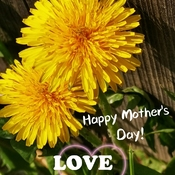 Happy Mother's Day! Thornhill May 9 2021