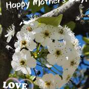 Happy Mother's Day - Thornhill May 8 2021