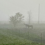 Misty morning in the Ottawa Valley