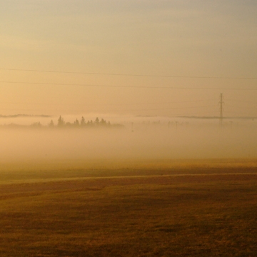 Morning Fog at Leduc