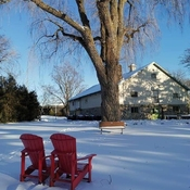 Winter memories - peaceful winter - Edwards Gardens, North York - Jan 20 2020