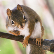 Don't touch my nuts !